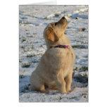Golden Pup Snow Greeting Card