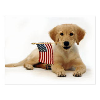 Golden Puppy and American Flag Postcard