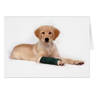 Golden Puppy Get Well Greeting Card