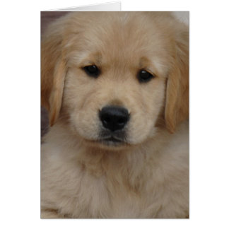 Golden Puppy Greeting Card