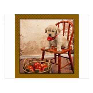 Golden Puppy on Chair Postcard