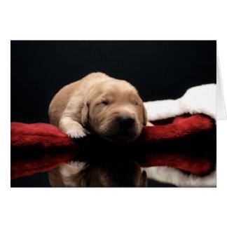 Golden Puppy & Stocking Cards