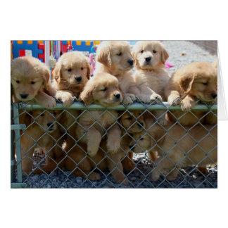 Golden Pups Greeting Card