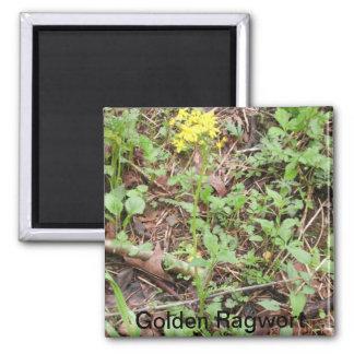 Golden Ragwort Magnet