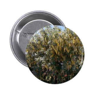Golden Rain Tree 1 Button