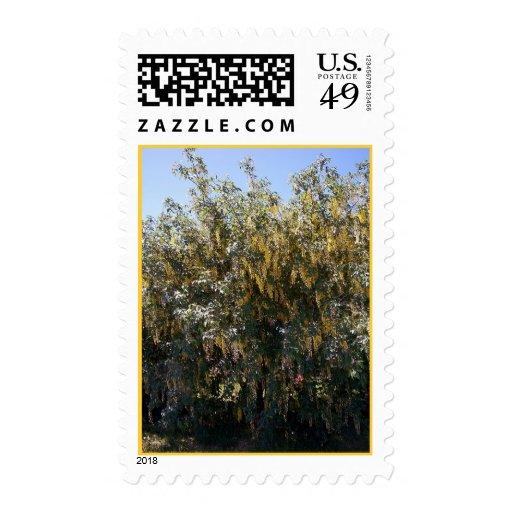 Golden Rain Tree 1 Stamp