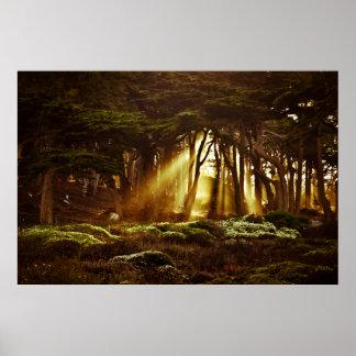 Golden Rays of Light Poster