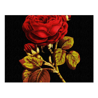 Golden Red Painted Rose Postcard