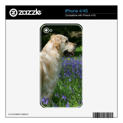 Golden Retreiver in Flowers Decal For iPhone 4S