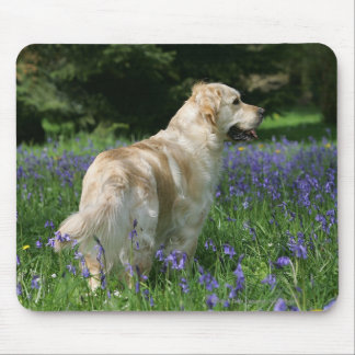 Golden Retreiver in Flowers Mouse Pad