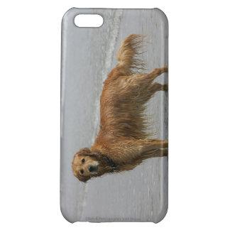 Golden Retreiver in the Sea iPhone 5C Cover