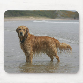 Golden Retreiver in the Sea Mouse Pad