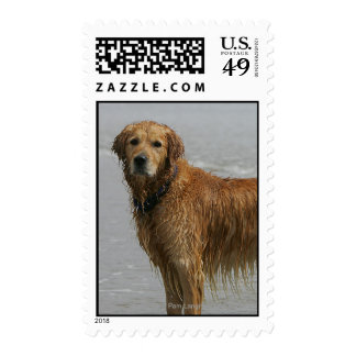 Golden Retreiver in the Sea Postage