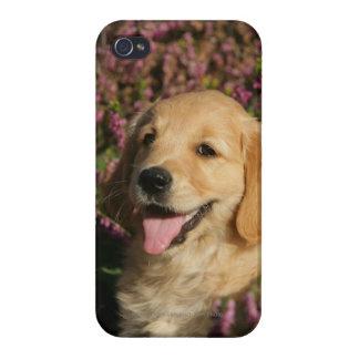 Golden Retreiver Puppy Cases For iPhone 4