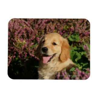 Golden Retreiver Puppy Magnet