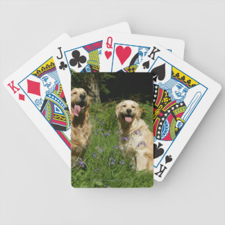 Golden Retreivers in Grass Bicycle Playing Cards