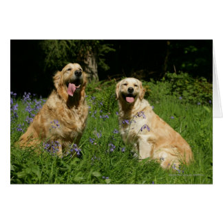 Golden Retreivers in Grass Card