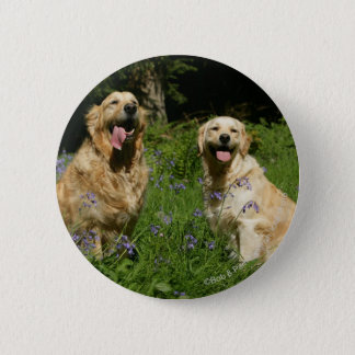 Golden Retreivers in Grass Pinback Button