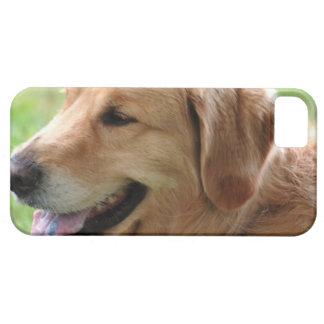golden-retriever-33 iPhone 5 cases