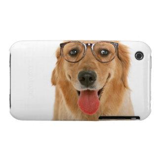 Golden retriever 3 iPhone 3 Case-Mate cárcasas