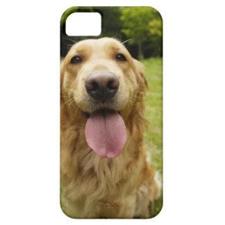 Golden retriever 4 iPhone 5 Case-Mate protector
