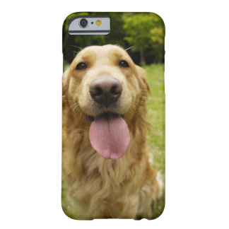 Golden retriever 4 funda barely there iPhone 6