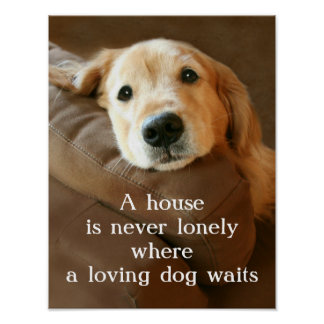 Golden Retriever A House Is Never Lonely Posters