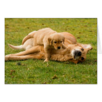 Golden Retriever and Puppy Father's Day Card