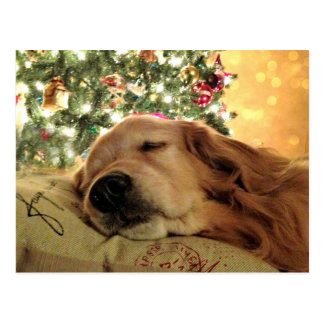 Golden Retriever Asleep By Christmas Tree Postcard