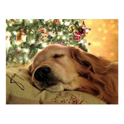 Golden Retriever Asleep By Christmas Tree Postcard