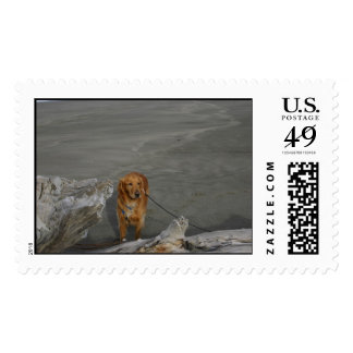 Golden Retriever at the Beach Postage Stamp