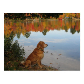 Golden Retriever Autumn at the Lake Postcard