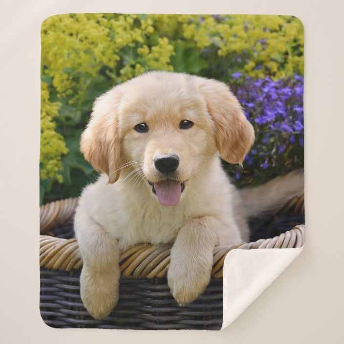 Golden Retriever Baby Dog Puppy Funny Pet Photo Sherpa Blanket Zazzle Com