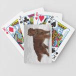 Golden retriever barajas de cartas
