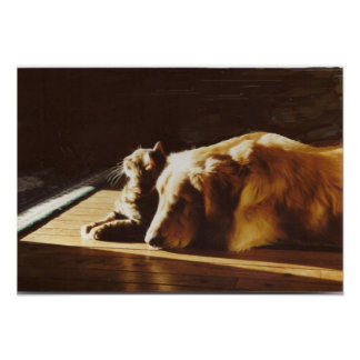 Golden Retriever Best Buddies Poster