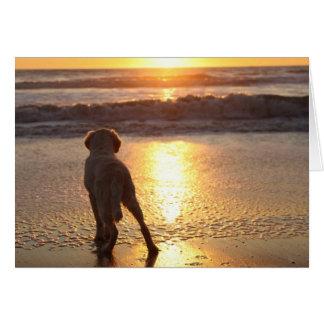 Golden Retriever Blank Photo Card