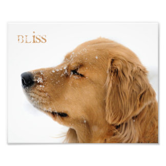 Golden Retriever Bliss Custom Text Photo Print