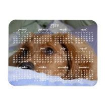 Golden Retriever Calendar 2019 With Photo Magnet