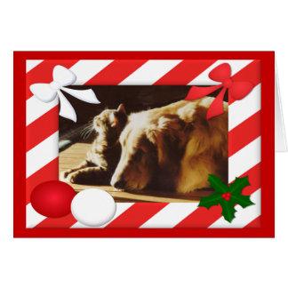 Golden Retriever-Cat Christmas Card Frame