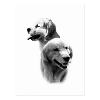 Golden Retriever Charcoal 2 Postcard