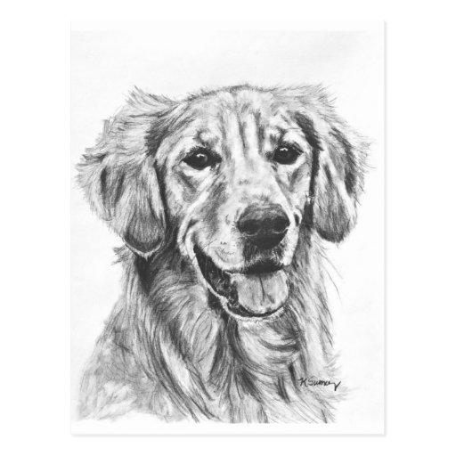 Golden Retriever Charcoal Sketch Postcard