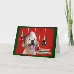 Golden Retriever Christmas Cards Gifts card