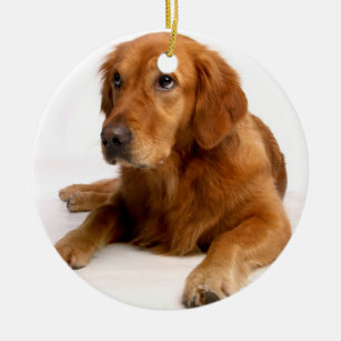 golden retriever christmas ornament with photo