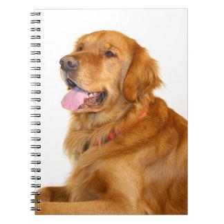 Golden retriever cuadernos