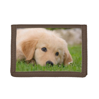 Golden Retriever Cute Puppy Dreaming Meadow, Purse Trifold Wallets