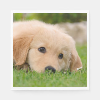 Golden Retriever Cute Puppy Dreams Dog Head Photo Paper Napkin