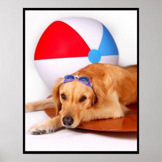 Golden retriever de la pelota de playa póster