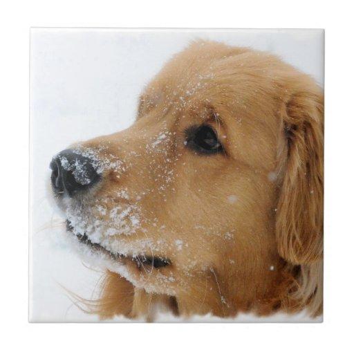 Golden retriever del perro de la nieve azulejos cerámicos