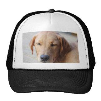 Golden Retriever Dog #2 Hats
