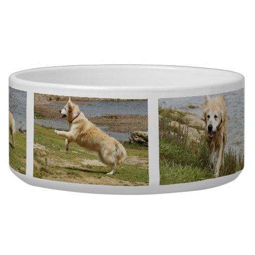 Golden retriever dog bowl. dog food bowls